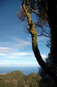 Anaga rain forest